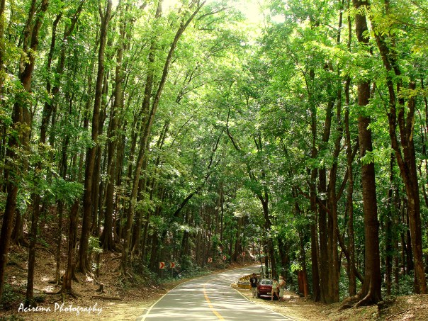 Man Made Forest in Bohol  Anything goes